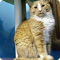 Adopt A Pet :: Monkey - West Des Moines, IA