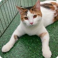Adopt A Pet :: Cassie - Romeoville, IL