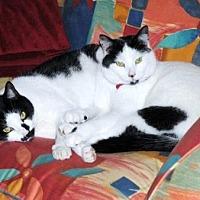 Adopt A Pet :: Hootie & Howie - Stuart, VA