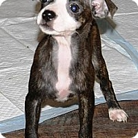 Adopt A Pet :: LuAnn - Vidor, TX