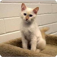 Adopt A Pet :: Honey - New Port Richey, FL