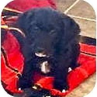 Adopt A Pet :: Ruby - Minnetonka, MN