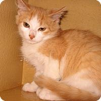 Adopt A Pet :: Nelson - Colmar, PA