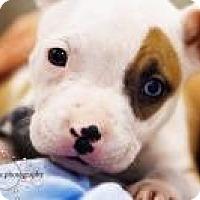 Adopt A Pet :: Ruby - Minneapolis, MN