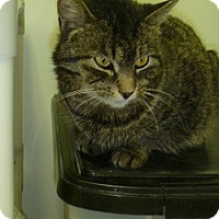 Adopt A Pet :: Sprite - Hamburg, NY