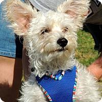 Adopt A Pet :: Happy - Humble, TX