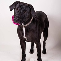 Adopt A Pet :: Tara - Irving, TX
