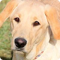 Adopt A Pet :: CHARLIE(THROWN AWAY-PLS READ!! - Wakefield, RI