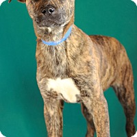 Adopt A Pet :: Turner - Waldorf, MD