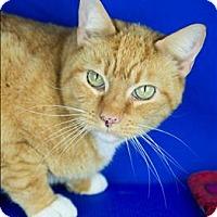 Adopt A Pet :: Landry - Sherwood, OR