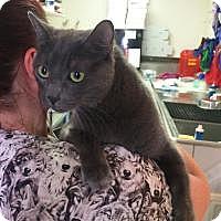 Adopt A Pet :: Ironman - Mission Viejo, CA