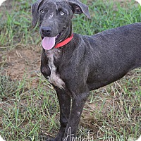 Adopt A Pet :: MYRA - Pilot Point, TX
