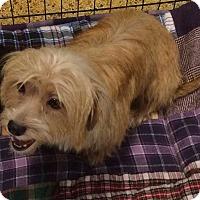 Adopt A Pet :: Laura - Concord, CA