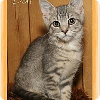 Domestic Shorthair Kitten for adoption in Shippenville, Pennsylvania - Dori