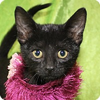 Adopt A Pet :: Ruby - Jackson, MI