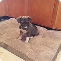 Adopt A Pet :: Alfalfa - Fincastle, VA