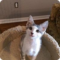 Adopt A Pet :: Ozone - Flower Mound, TX