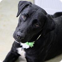 Adopt A Pet :: Seven - Picayune, MS