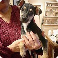 Adopt A Pet :: Charlie - Eugene, OR