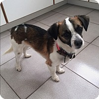 Adopt A Pet :: Rico - Prospect, CT