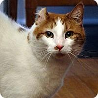 Adopt A Pet :: Winston - Alexandria, VA