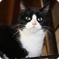 Adopt A Pet :: Mickey - Maxwelton, WV