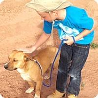 Adopt A Pet :: Ken - Santa Fe, NM
