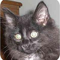 Adopt A Pet :: Snuffleupagus - Lombard, IL