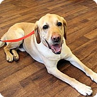 Adopt A Pet :: Beaux - Cumming, GA