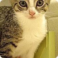 Adopt A Pet :: Rose - Seminole, FL