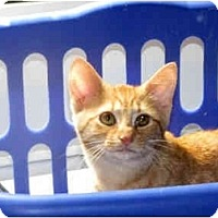 Adopt A Pet :: Neeta - Xenia, OH