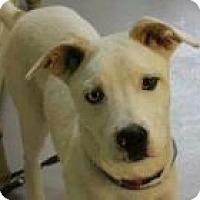 Adopt A Pet :: Gibbs - Marlton, NJ