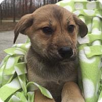 Adopt A Pet :: Merry - Salem, MA