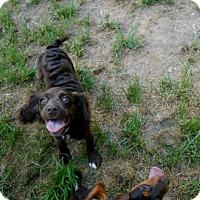 Adopt A Pet :: Meg -Adopted! - Kannapolis, NC