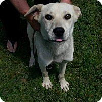 Adopt A Pet :: Shasta - Stamford, CT