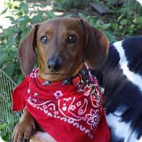 Adopt A Pet :: ZEKE - Portland, OR