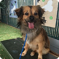 Adopt A Pet :: JJ - Redondo Beach, CA