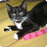 Adopt A Pet :: Chloe b. - Oxford, NY