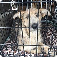 Adopt A Pet :: Langley - San Francisco, CA