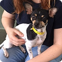Adopt A Pet :: Cheyanne - Studio City, CA