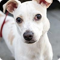 Adopt A Pet :: Eugene - Encino, CA