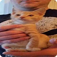 Adopt A Pet :: FLOKI - San Antonio, TX