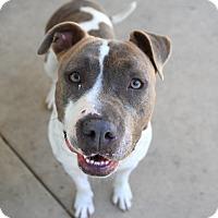 Adopt A Pet :: Dahlia - Chula Vista, CA