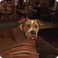 Adopt A Pet :: Hercules - Gardner, IL