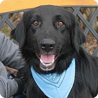 Adopt A Pet :: Moe - Garfield Heights, OH
