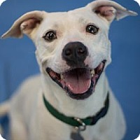 Adopt A Pet :: Bentley - Bradenton, FL