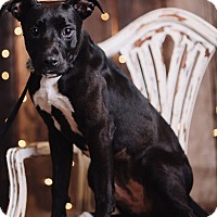 Adopt A Pet :: Prim - Portland, OR