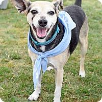 Adopt A Pet :: Ms. Penny - Homewood, AL