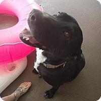 Adopt A Pet :: Kimmy - Windermere, FL