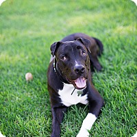 Adopt A Pet :: Bao - Mission Viejo, CA